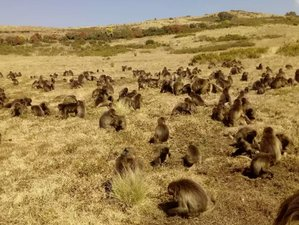 15 Day Private Wildlife Safari, Multi-day Treks and Key Cultural Sites in South and North Ethiopia