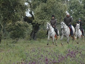 7 Day Picturesque Horse Riding Holiday in Monfragüe National Park, Spain