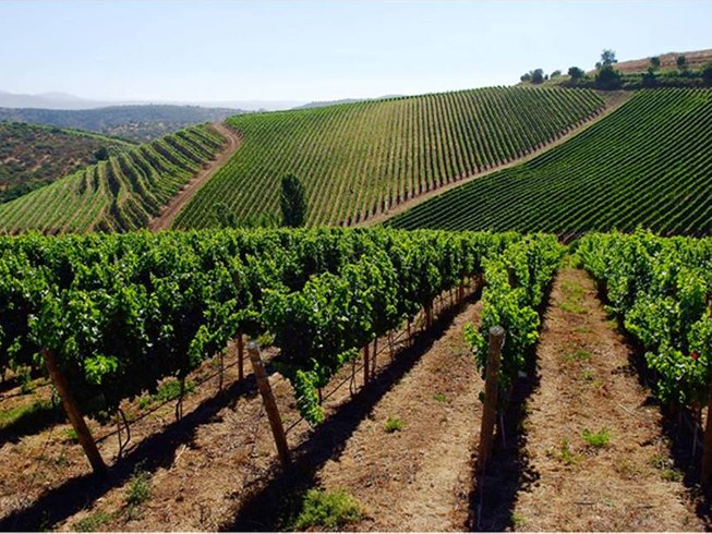8 Days Walking Chile Wine Tour