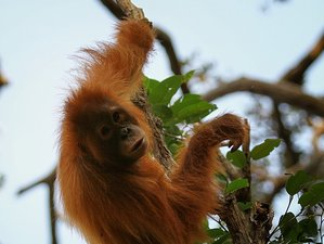4 Day Orangutan Adventure Tour in Tanjung Puting National Park