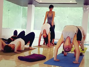 22 Days 200-Hour Multi-Style Yoga TTC in Dharamsala