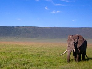 5 Days Camping Safari in the Wonderful Serengeti and Ngorongoro Crater, Tanzania