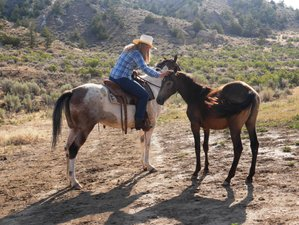 14 Day Working Ranch Vacation in Thermopolis, Wyoming