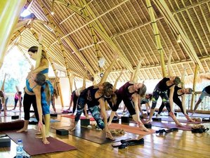 29 Days 200-Hour Vinyasa Yoga Teacher Training in Bali