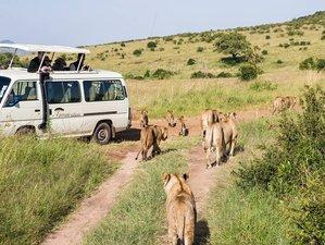 5 Days Kenya Budget Safari Maasai Mara, Lake Nakuru and Lake Naivasha