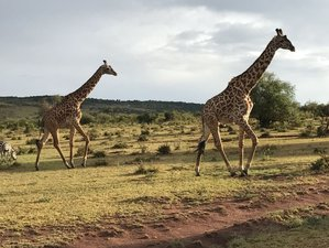 7 Days safari to Maasai Mara, Lake Nakuru and Amboseli National parks