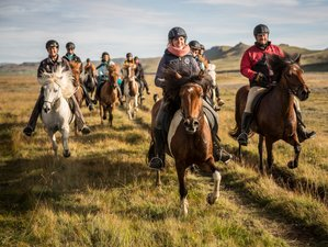 7 Day Horse Riding Holiday with Free Running Herd in the Icelandic Highlands, Iceland