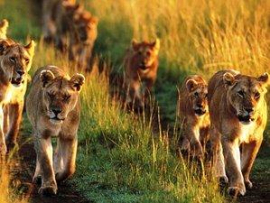 3 Days Budget Safari in Amboseli National Park, Kenya