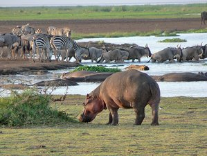 11 Days Serengeti, Ngorongoro, Manyara, Masai Mara, Lake Nakuru Safari