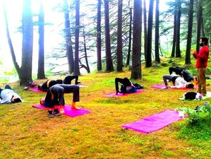 15 días retiro de yoga, respiración y meditación con los siete chakras en el Himalaya, India