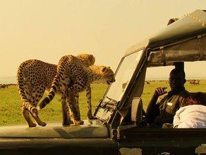 3 Days Maasai Mara Safaris in Kenya