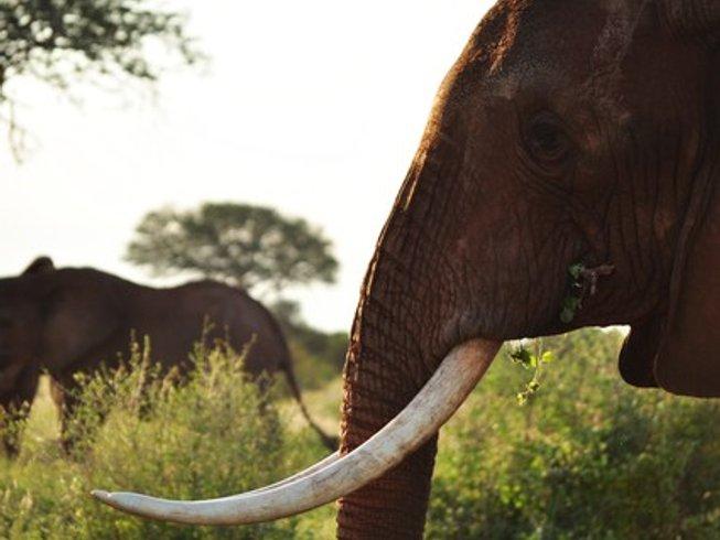 5 Days Majestic Safari in Kenya