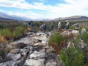 3 Days Safari and Guided Tour of West Coast Wild Flower Route in Western Cape, South Africa