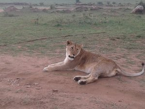 3 Days Kisumu and Masai Mara Budget Joining Camping Safari in Kenya