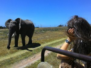 5 Days Big Five Safari in Garden Route, South Africa