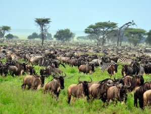 4 Days Camping Safaris in Tanzania