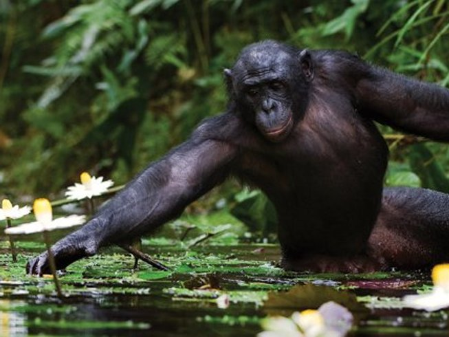 13 Days Chimp and Gorilla Trekking Safari in Uganda