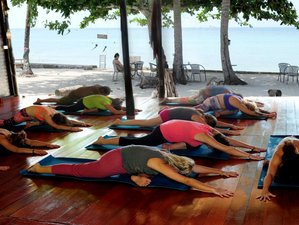 29 Days Awakening & Healing Yoga Holiday in Koh Phangan, Thailand