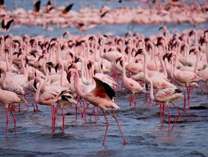 2 Days Admire the Flamingos in Lake Bogoria and Lake Baringo, Kenya