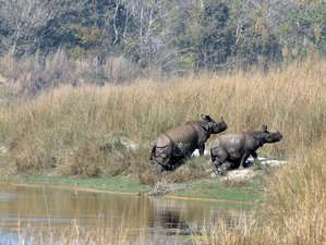 7 Day Jungle Safari in Bardiya National Park, Nepal