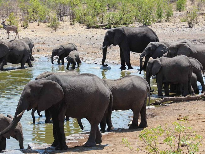 12 Days Cooking Holiday and Wildlife Safari in South Africa