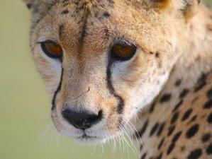 7 Days Guided Wildlife Safari in Tanzania