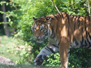 7 Day Wildlife Safari in Shuklaphanta National Park, Nepal