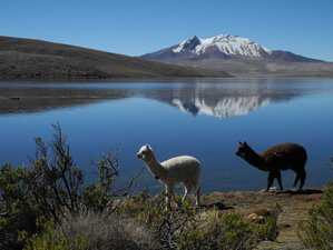 3 Day Wildlife Tour in Chile