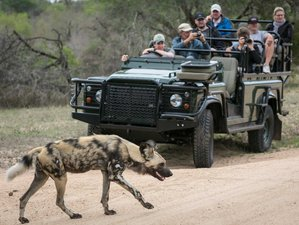 4 Days Sabi Sand Private Budget Safari in South Africa