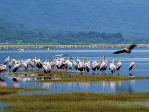 4 Days Safari Tour in Lake Manyara, Ngorongoro Crater, and Tarangire National Park, Tanzania
