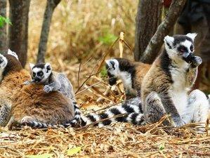 10 Days Tsiribihina River Trip and Wildlife Tour in Madagascar
