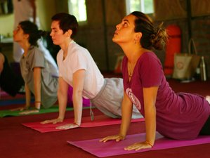 28 Day 200-Hour Hatha Yoga Teacher Training Course in Rishikesh