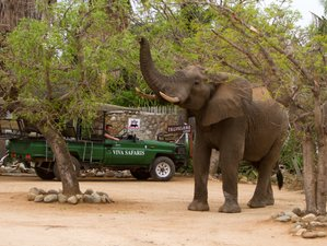 3 Days Classic Big Five Safari in Balule Nature Reserve and Kruger National Park, South Africa