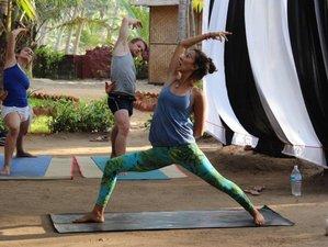 15 Days 200-hour Yoga Alliance Ashtanga and Vinyasa Yoga Teacher Training in Goa, India
