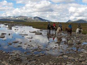 5 Days Horseback Riding Holiday Along the Free River of Vindelälven in Ammarnäs, Sweden