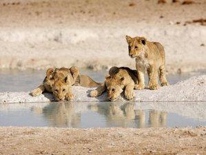 14 Days Winelands, Whales & Wildlife Safari South Africa