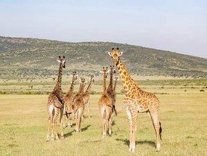 6 Days Fascinating Safari in Kenya