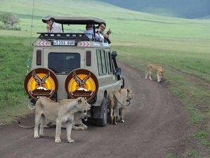 7 Days Best of Tanzania Wildlife and Hadzabe Tribe Experience