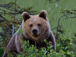 2 Day Bear Watching Tour in Kuusamo, Finland