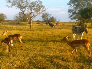 11 Days South Africa Safari in Kruger National Park