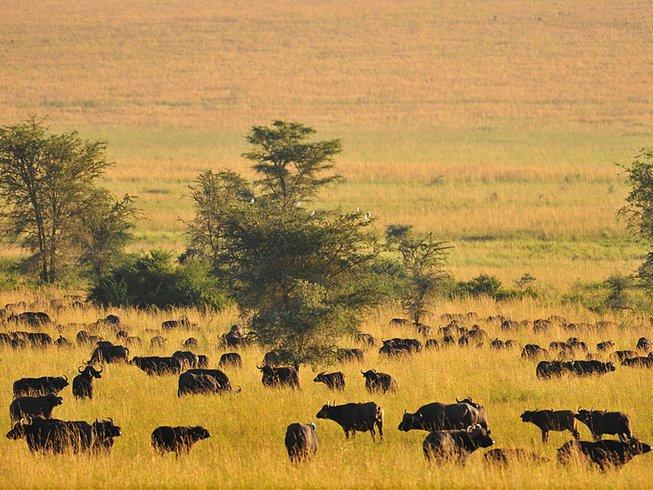 5 Days Photography Safari in Uganda
