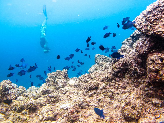 3 Days Freedive and Yoga Retreat in the Philippines