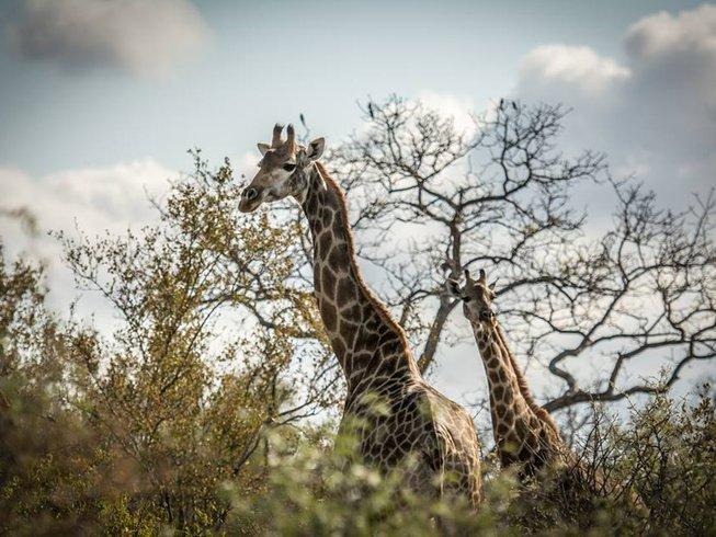 3 Days Nambiti Private Game Reserve Safari in South Africa