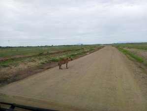 3 Days Guided Safari in Lake Nakuru, Kenya