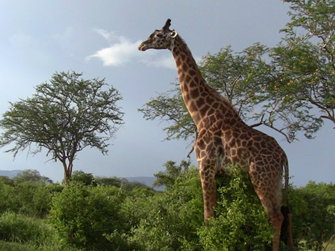 2 Days Private Tsavo East National Park Safari