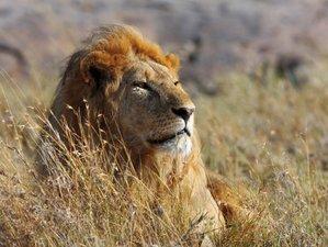 3 Days Lake Manyara National Park Camping Safari