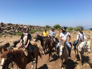 3 Day Unforgettable Luxury Horse Riding Holiday in Golan Heights, Northern District