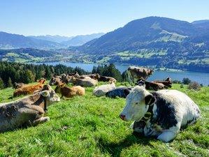 4 jours en retraite de yoga pour trouver la joie, l'énergie et la vitalité en montagne à Allgäu, Allemagne
