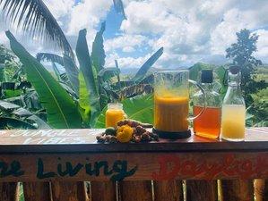 4 Day Nature Detox Yoga Jungle Retreat at The Living Daylights JA, Port Antonio