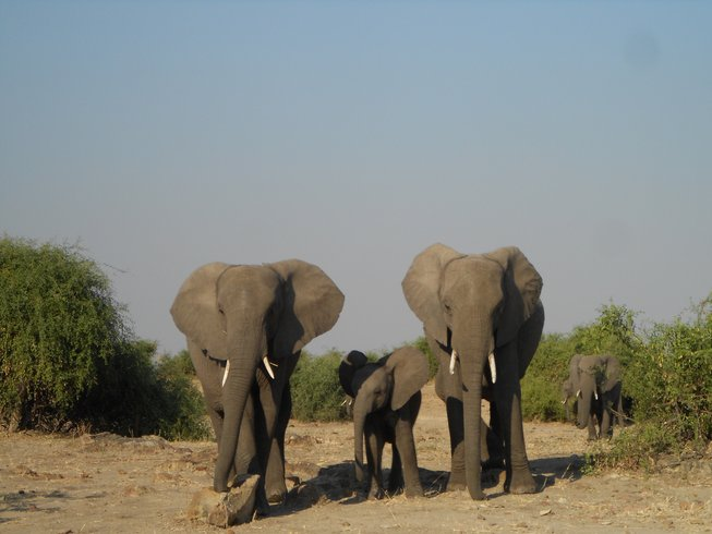 20 Days Into The Wild Safari in Botswana, Namibia, and Zimbabwe